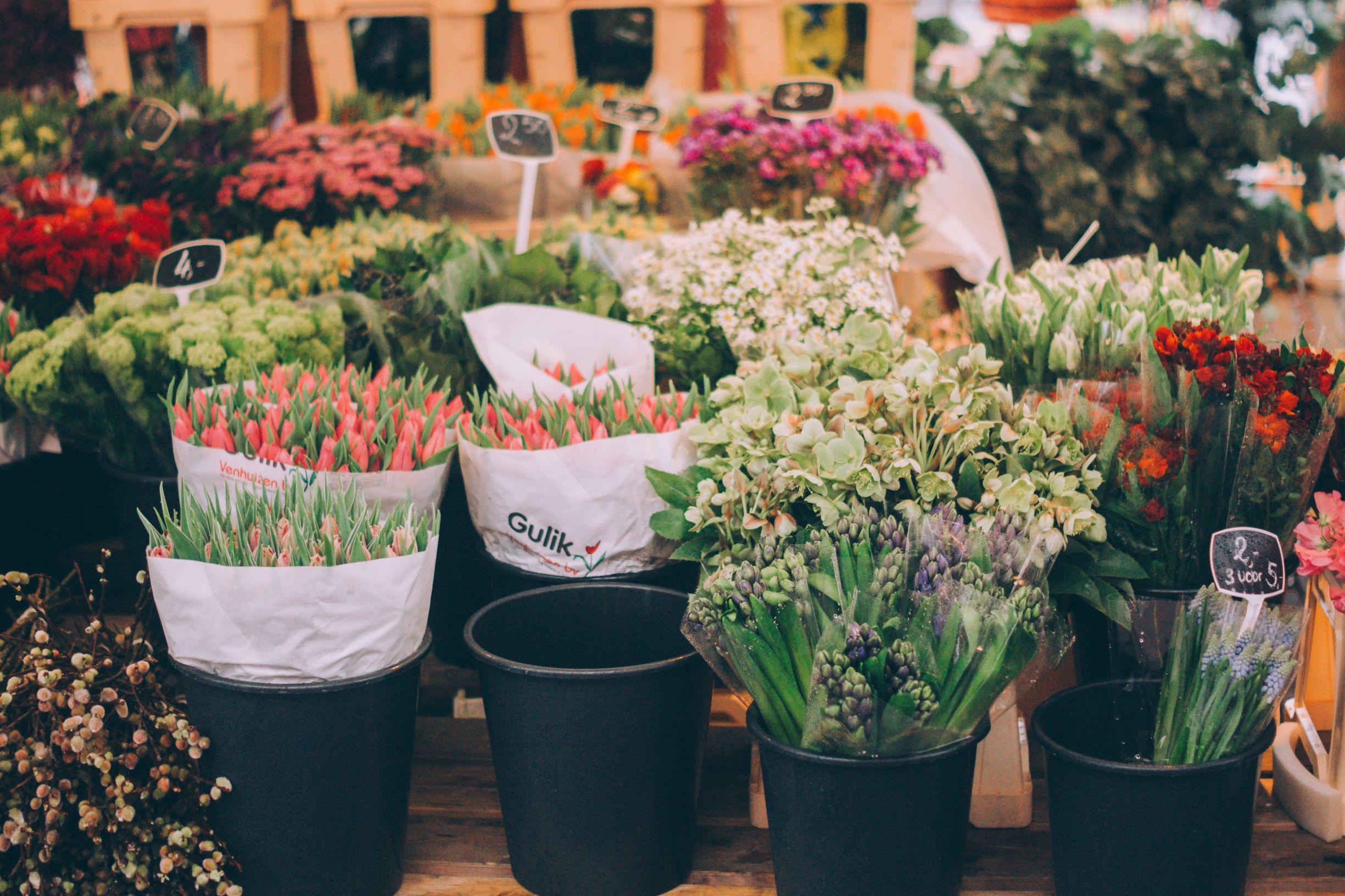 Hà Lan là xứ sở ngàn hoa.