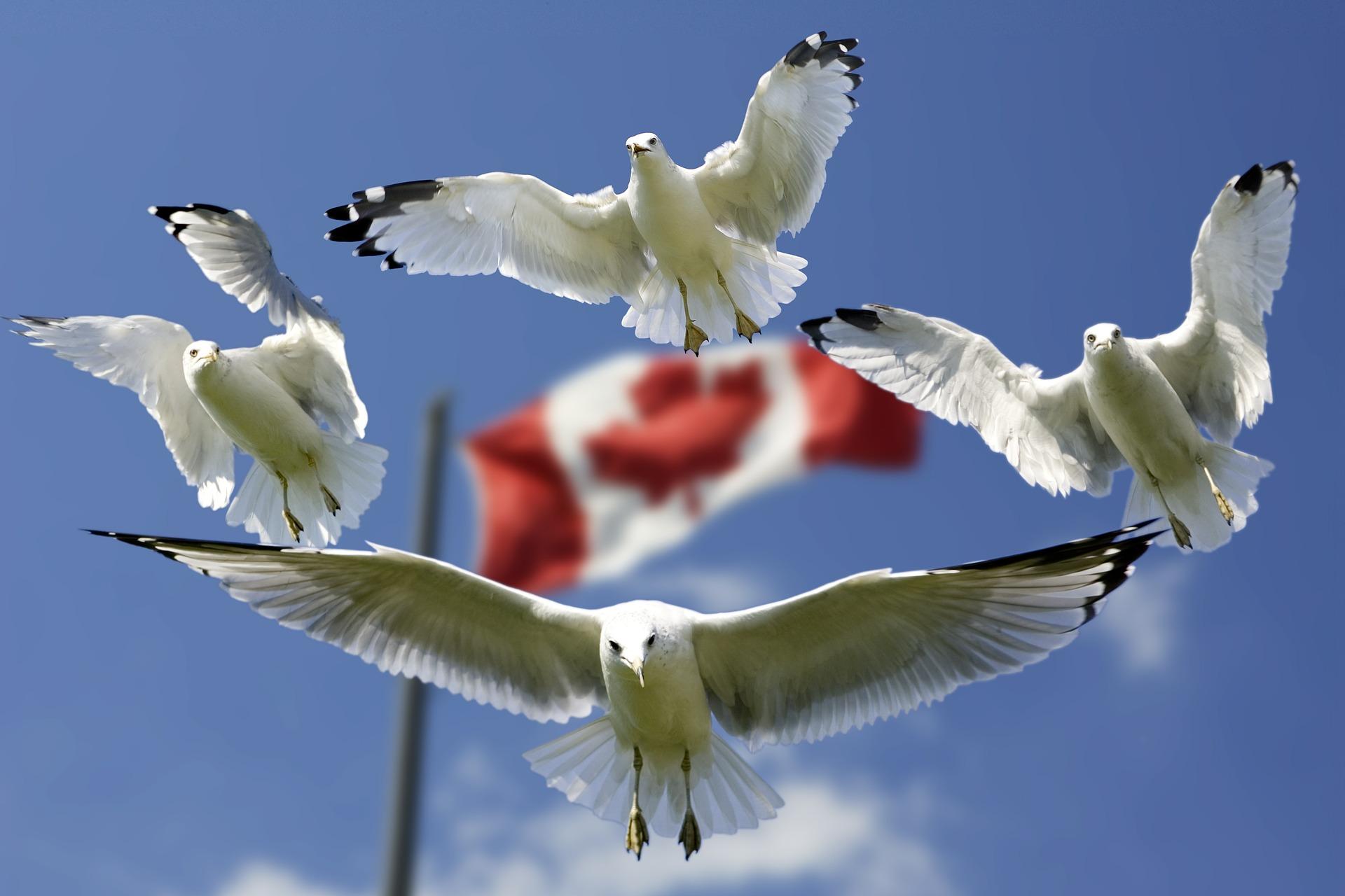 Canada luôn thu hút bạn bè du lịch quốc tế bởi sự hòa hợp giữa thiên nhiên và con người.